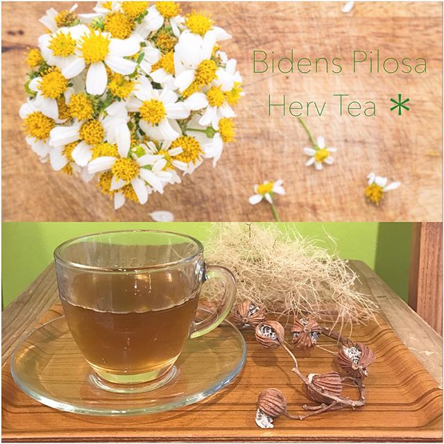 *ドリンクメニューに新しくハーブティーが追加されました♡*宮古島の強い日差しや厳しい環境に負けることなく、可憐な白い花を咲かせるビデンス ピローサを使用したハーブティーです***奇跡のハーブと呼ばれ、30種類以上のポリフェノールを含みます更に花粉症やアトピー、腸内環境の改善、抗肥満、抗炎症、美肌効果など、、、様々な効果が期待できます️🏻***花粉症にお悩みの方の多い、今の時期にもぴったりですノンカフェインでクセも少なく飲みやすいところも◎***ぜひ一度お試し下さい***#rhair#rhairatelier#薬院美容室#福岡美容室#ビデンスピローサ#ビデンスピローサ茶#イムダイン#イムタス#ハーブティー#ノンカフェイン#デトックスティー#デトックス#ダイエット#花粉症緩和#花粉症予防#花粉症#美肌効果