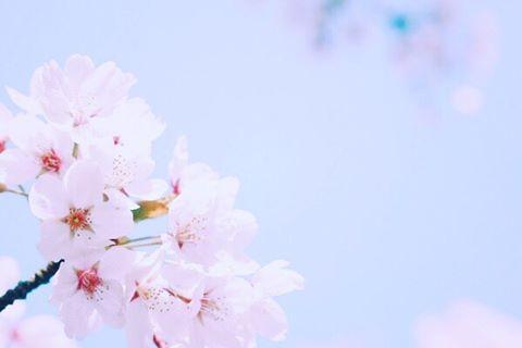 4月 スタッフ公休日お知らせ