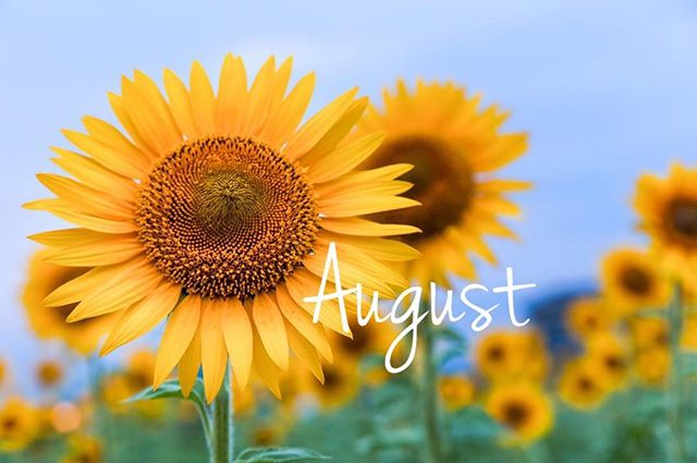 **毎日暑い日が続いていますね!イベントの多い夏も本番です︎ヘアスタイルも夏仕様にチェンジしませんか?***8月のスタッフの公休日をお知らせ致します︎*大久保・10(木)、25(金)曽田・16(水)、29(火)城・8(火)、22(火)***なお、毎週月曜日、第3火曜日(15日)は定休日となっております!よろしくお願い致します︎***#r#rhair#福岡美容室#薬院美容室#美容室#美容院#ヘアサロン#エッセンシティ#オーガニックカラー#ジョンマスター#ジョンマスターオーガニック#johnmastersorganics#ユフォラ#ユフォラ取り扱い店舗#オーガニック#オーガニックサロン#bojico#ボジコ#ひまわり#sunflower#flower#花#instapic#instagood#instaflower